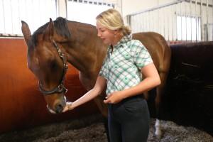 Hevosen koulutusta