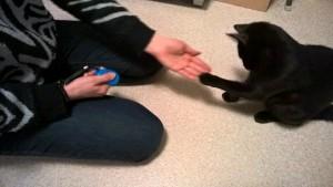 Kissa anta tassua