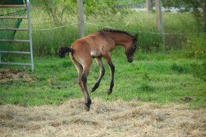 Hevoset tykkäävät liikkumisesta.