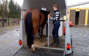 Hevoset oppivat nopeasti uusia taitoja, mutta oma hommansa on yleistää taidot osaksi sujuvaa arkea.