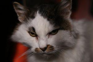 Kissa ei ystävysty kenen kanssa tahansa, tietää Rätti.